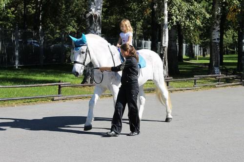 В Харькове хотят запретить катание на лошадях