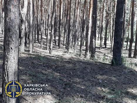 https://gx.net.ua/news_images/1622019786.jpg