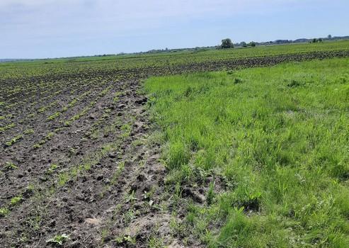 На Харьковщине фермера лишили земли из-за попытки схитрить