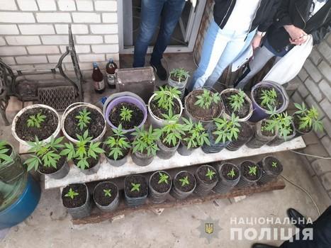 """Прибыльный """"огородный"""" бизнес обернулся неприятностями для харьковчанина (фото)"""