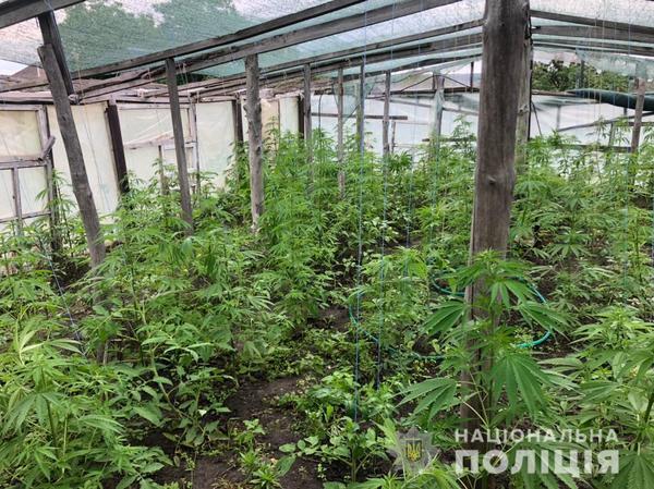 Огурцы вперемешку с коноплей. Житель Харьковщины занялся противозаконным фермерством (фото)