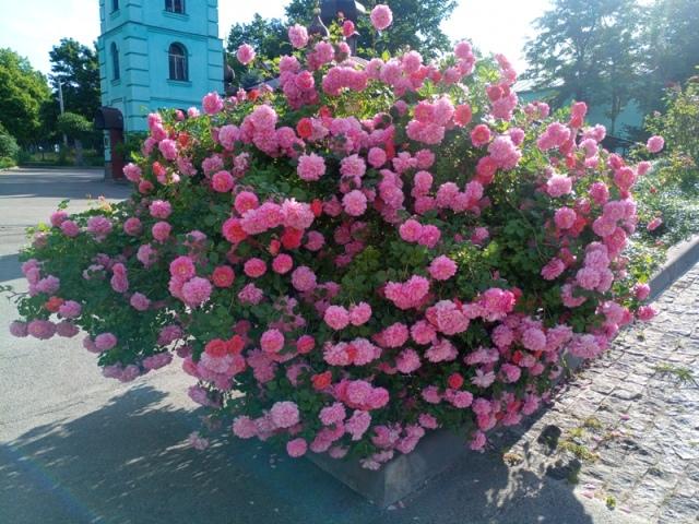 В Харькове настоящее лето началось с праздника (фото, видео)