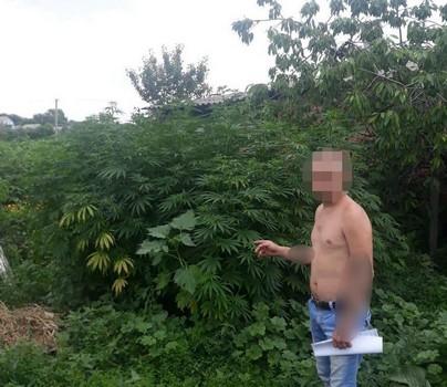 Жителям Харьковщины устроили взбучку из-за любви к растениям (фото)