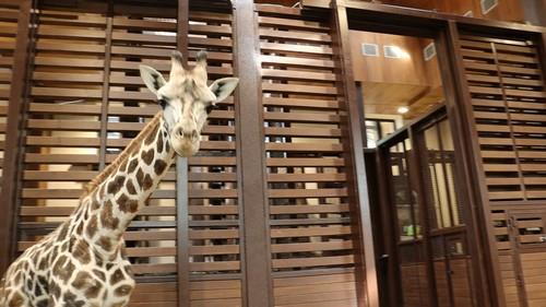 Заедал стресс и слушал музыку. В Харьковском зоопарке рассказали о предпочтениях нового обитателя (фото, видео)
