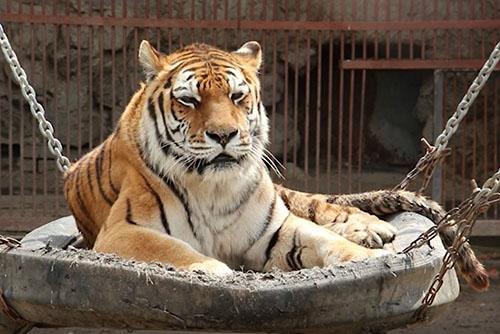 Поход по тропе тигра и жестокое убийство тещи юношей. Итоги недели