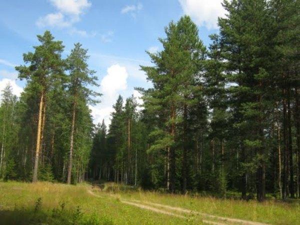 Уникальные леса Харьковской области